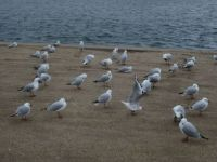 A gathering of seagulls
