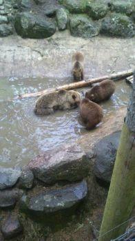 Björnarna Järvzoo