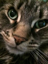 My Prince Tago