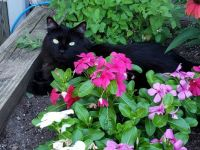 Jinxie guarding the cat mint