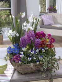 Gift Basket.... Magnificient Variety Of Flowers.
