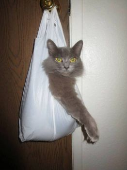 My cat is half in the bag.