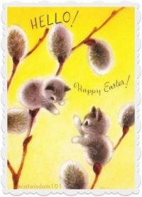 A belated Easter wish!