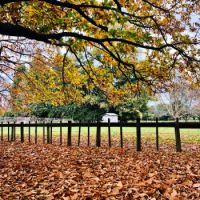 Fallen Leaves NZ