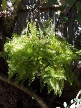 fern in winter