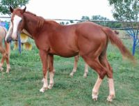3 year old colt for sale