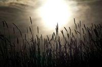Sun in the Grass