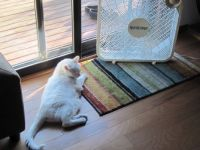 Today''s CAT Weather Prediction