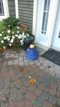 My miniature jack o' lantern