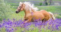 Theme.  Horses.