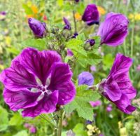Flower meadow I