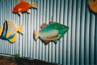 My paintings of Parrot fish and Pork fish on fence