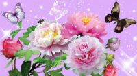 peony-pride-butterflies-butterfly-firefox-persona-floral-flowers-peonies-shine-sparkles-stars-summer