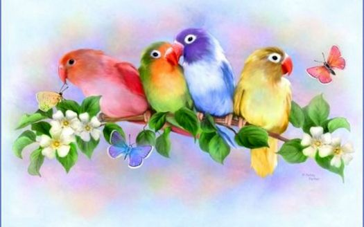 Rainbow Love Birds