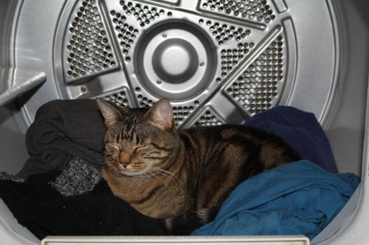Sound asleep IN the dryer