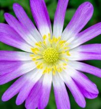 flower-5428705_960_720