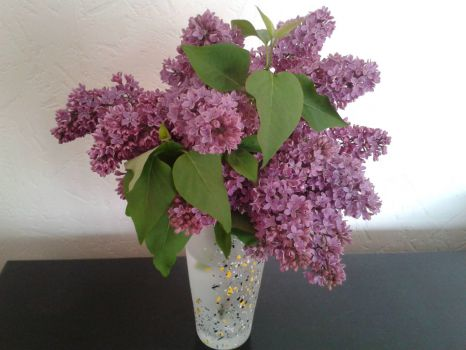 Lilac at home