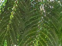 ferny leaf design