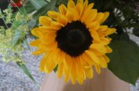Sunflower in a bouquet