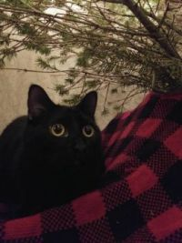 Mr. Riley Under the Christmas Tree