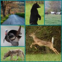 Cades Cove Collage 1 (extra large)