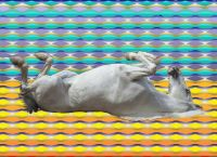 HORSE ROLLING ON MY PATTERN