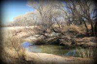 SAN PEDRO NATIONAL RIPARIAN CONSERVATION AREA