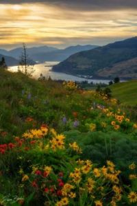 Flowers & Mountains - Erwin Buske Photography