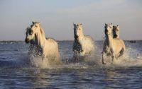 Horses / Konie (1)