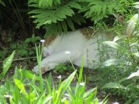 Kitty Kat Naps on the Patio under the ferns