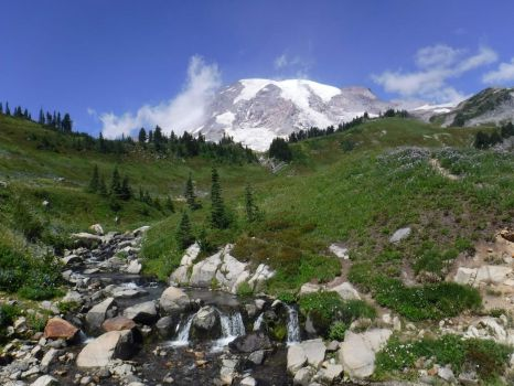 Mt. Rainier, Rainier National Park, Washington state, USA