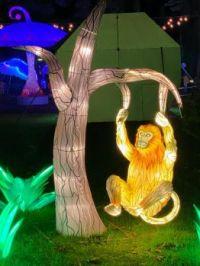Seattle Zoo Holiday lantern light walk