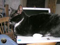 My Laptop ...