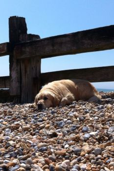 Beached Dog