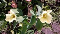 April flowers (1).jpg