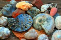 Shells and ammonite!!