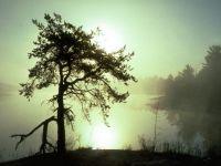 nature_119