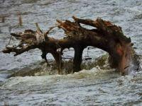 A creek monster