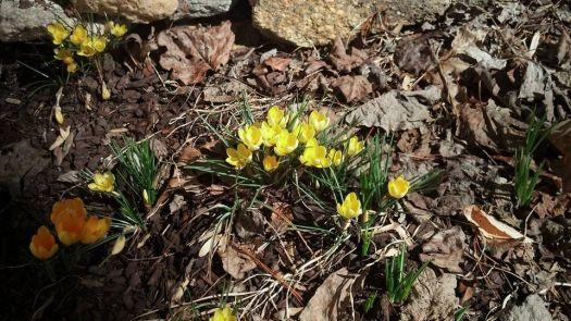 spring :-)