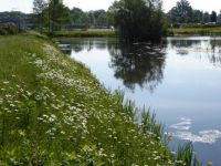 Winterswijk. The pond next to the hospital