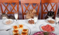 Purrfect dining