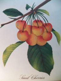 Sweet Cherries, 63 pieces