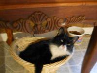 Alvin in his basket