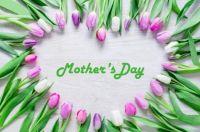 Purple Tulips for Mom