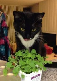 Can't get any fresher catnip than this!