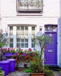 Purple Door
