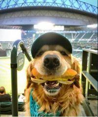 Good boy at the ballpark