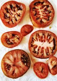 Kumato Tomatoes Ready for Tromboncino Squash Casserole
