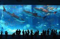 Okinawa Churaumi Aquarium (Motobu, Japan)