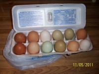 """Natures"" colored eggs"
